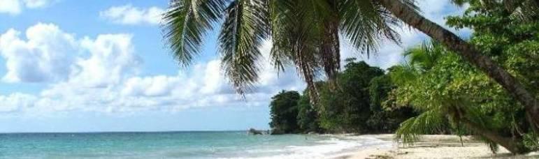 DSM-IV Playa en la naturaleza